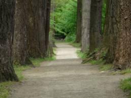 Arboretum w Karnieszewicach