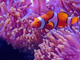 Oceanarium w Międzyzdrojach